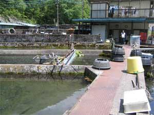 中村養魚場