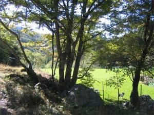 ドッグランの木々