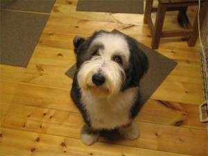 シャンプー後の愛犬