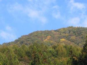 大鹿の山の紅葉