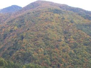 入沢井集落から見た紅葉
