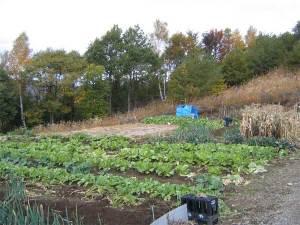 大池高原の野菜畑